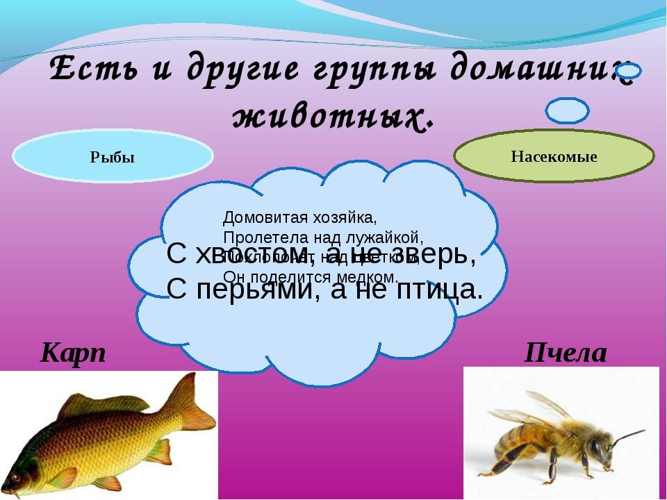 Есть и другие группы домашних животных. С хвостом, а не зверь, С перьями, а...