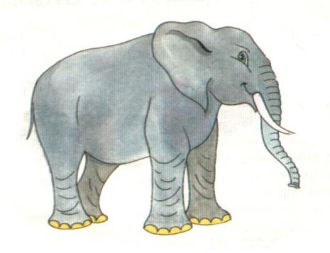 слонопатам