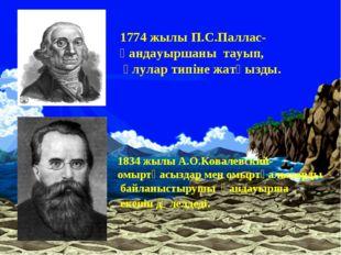 1774 жылы П.С.Паллас-қандауыршаны тауып, ұлулар типіне жатқызды. 1834 жылы А.