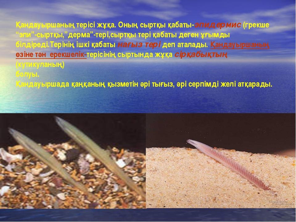 """Қандауыршаның терісі жұқа. Оның сыртқы қабаты-эпидермис (грекше """"эпи""""-сыртқы,..."""