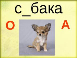 с_бака О А