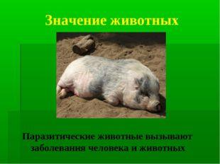 Значение животных Паразитические животные вызывают заболевания человека и жив