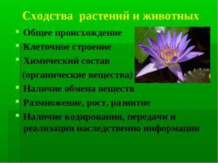 Сходства растений и животных Общее происхождение Клеточное строение Химически