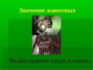 Значение животных Распространяют плоды и семена