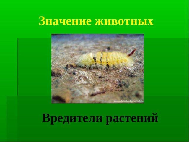 Значение животных Вредители растений