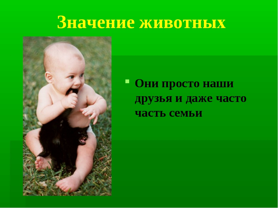 Значение животных Они просто наши друзья и даже часто часть семьи