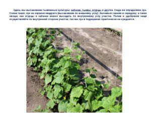 Здесь мы высаживаем тыквенные культуры: кабачки, тыквы, огурцы и другие. Сюда