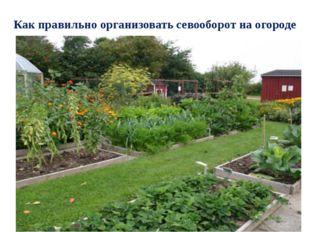 Как правильно организовать севооборот на огороде