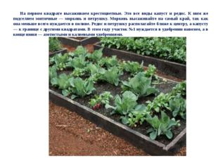На первом квадрате высаживаем крестоцветные. Это все виды капуст и редис. К н