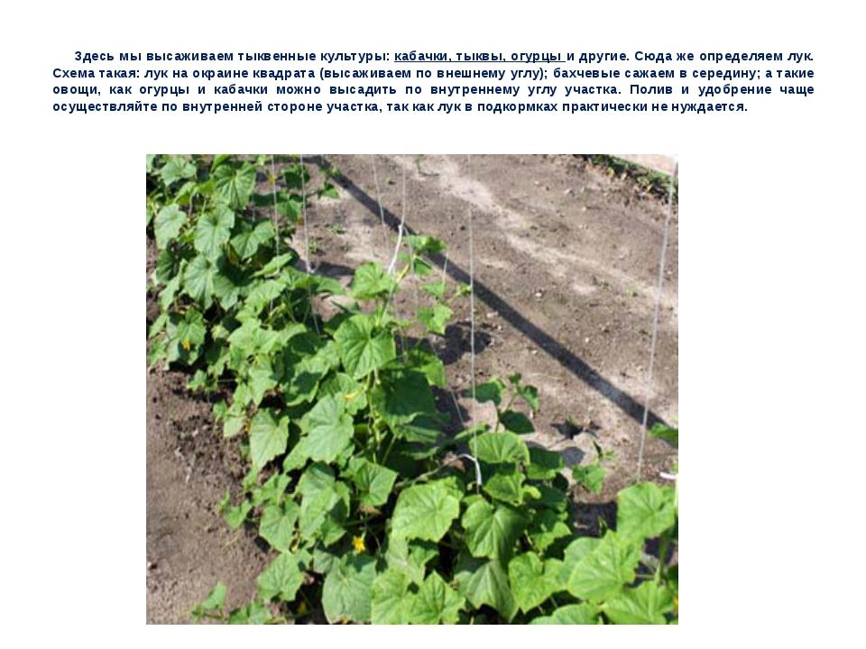 Здесь мы высаживаем тыквенные культуры: кабачки, тыквы, огурцы и другие. Сюда...
