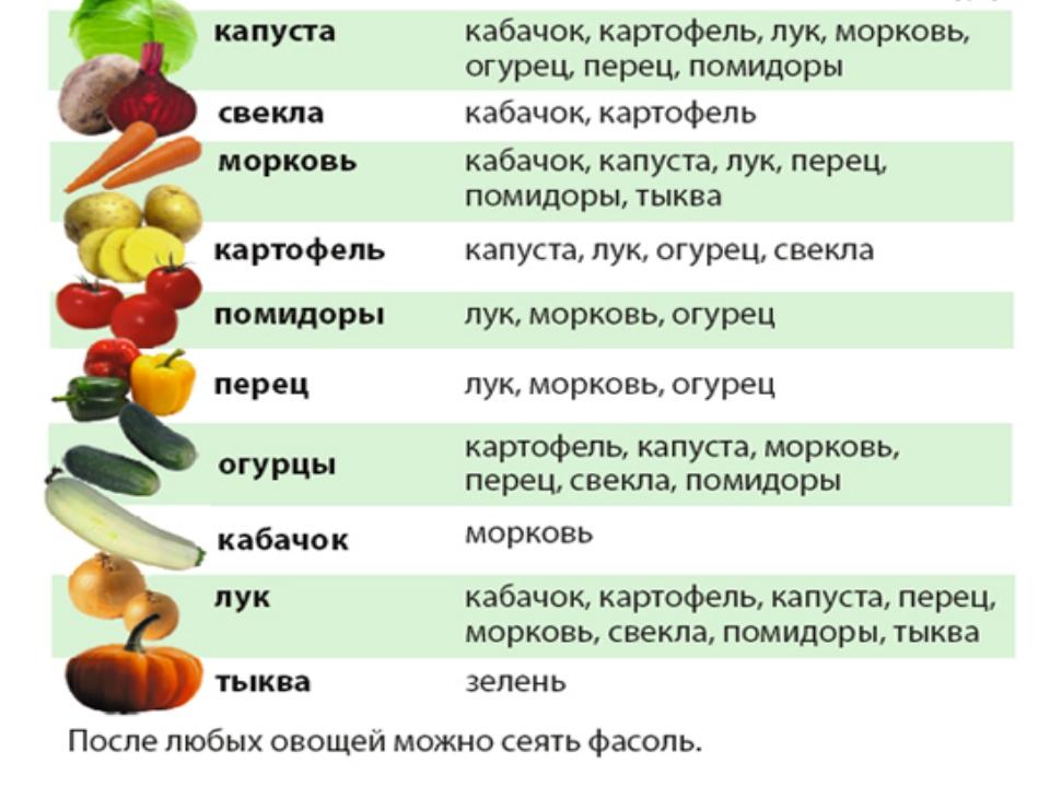 картошка капуста кабачок морковь лук