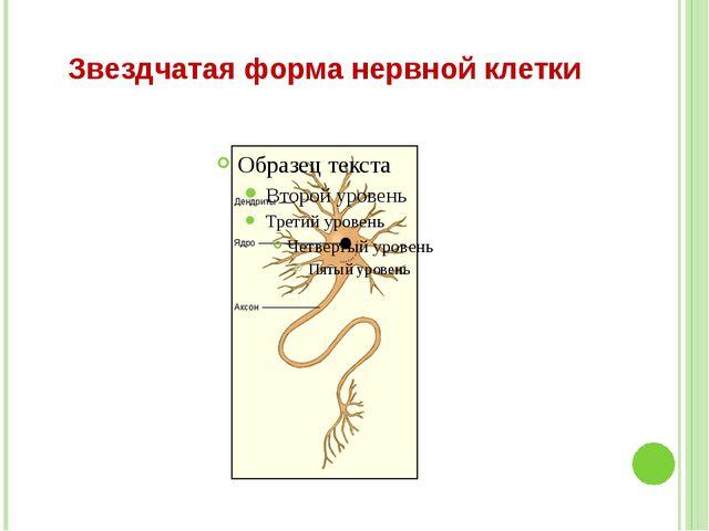 Звездчатая форма нервной клетки