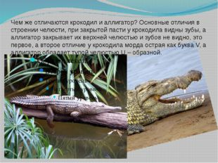 Чем же отличаются крокодил и аллигатор? Основные отличия в строении челюсти,