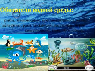 Обитатели водной среды: рыбы, земноводные, пресмыкающиеся, киты, дельфины, ра