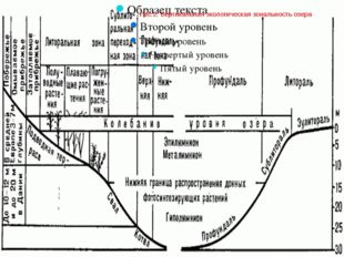 Рис.2.Вертикальнаяэкологическаязональностьозера