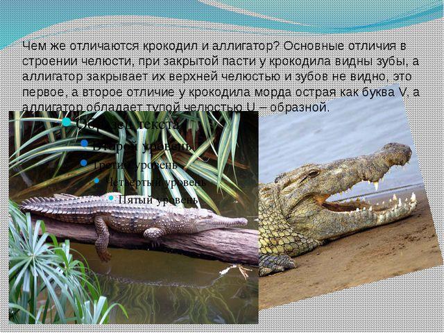 Чем же отличаются крокодил и аллигатор? Основные отличия в строении челюсти,...