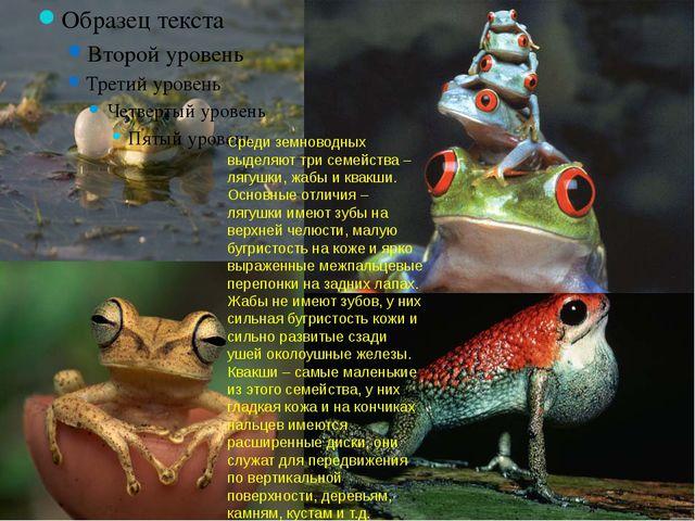 Среди земноводных выделяют три семейства – лягушки, жабы и квакши. Основные о...