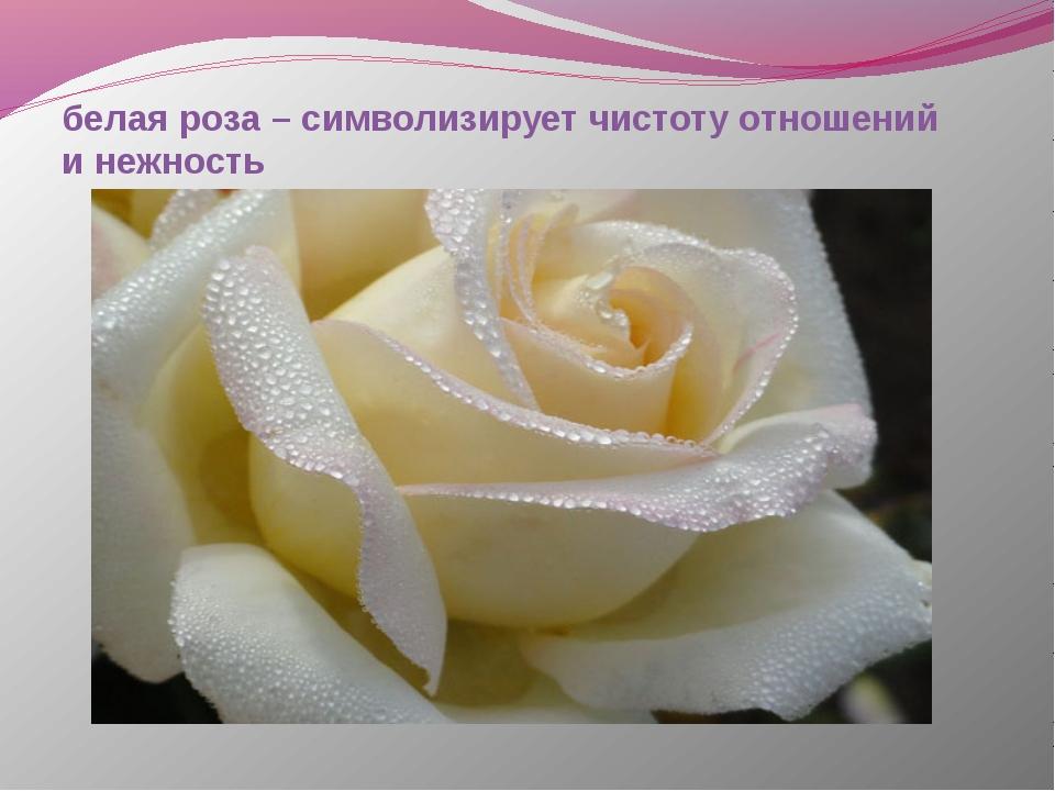 белая роза – символизирует чистоту отношений и нежность