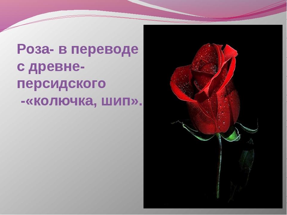 Роза- в переводе с древне-персидского -«колючка, шип».