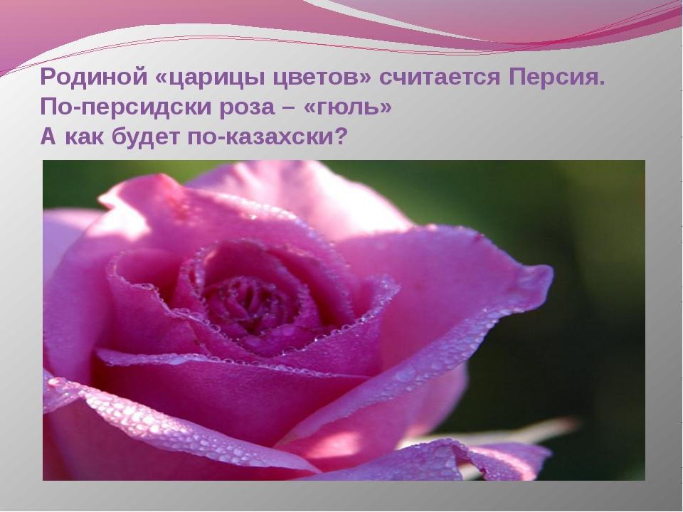 Родиной «царицы цветов» считается Персия. По-персидски роза – «гюль» А как бу...