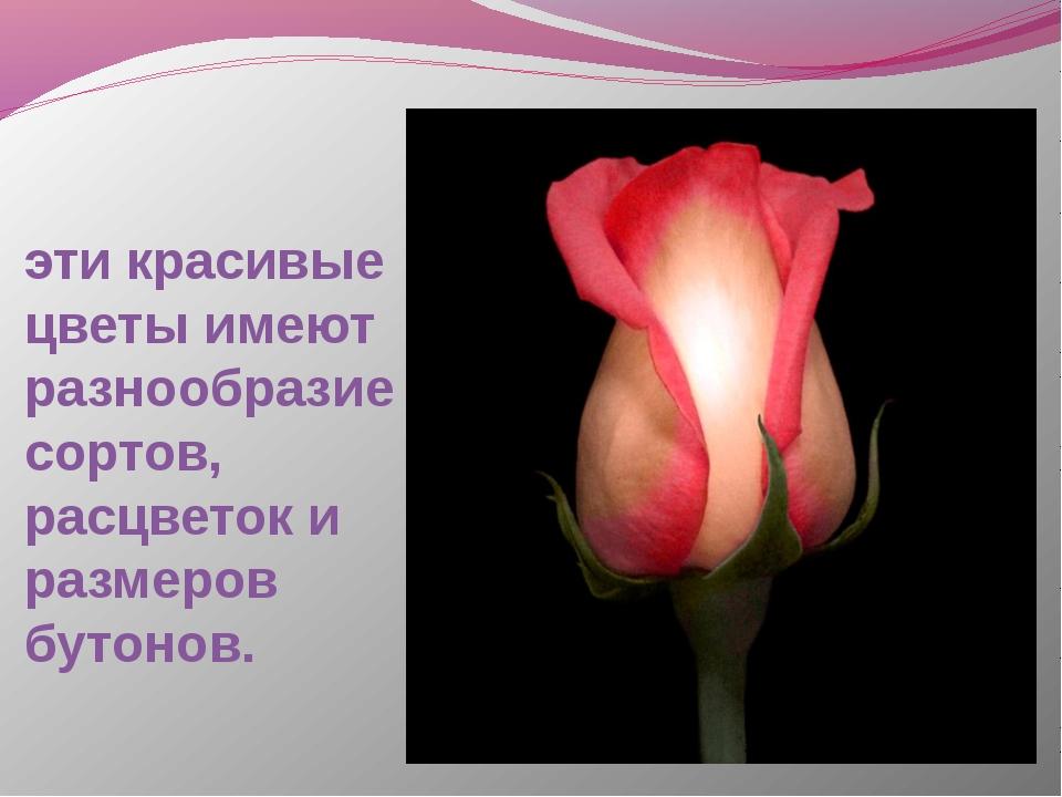 эти красивые цветы имеют разнообразие сортов, расцветок и размеров бутонов.