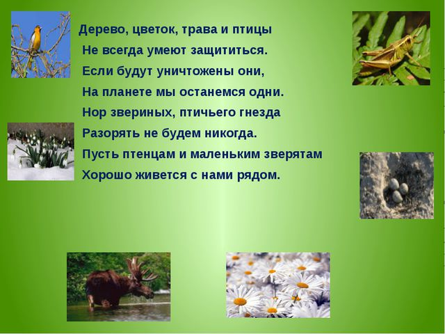 Дерево, цветок, трава и птицы Не всегда умеют защититься. Если будут уничтоже...