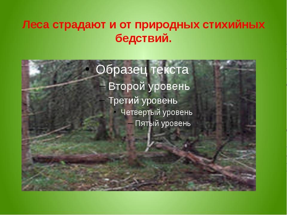 Леса страдают и от природных стихийных бедствий.