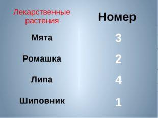 Номер 3 2 4 1 Лекарственные растения Мята Ромашка Липа Шиповник