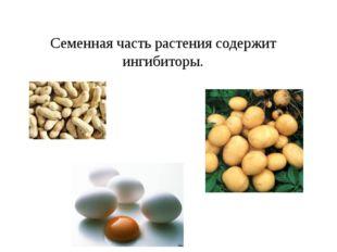 Семенная часть растения содержит ингибиторы.