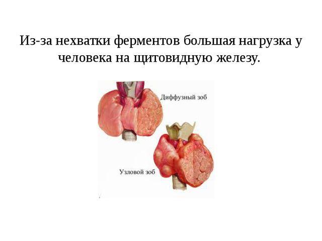 Из-за нехватки ферментов большая нагрузка у человека на щитовидную железу.