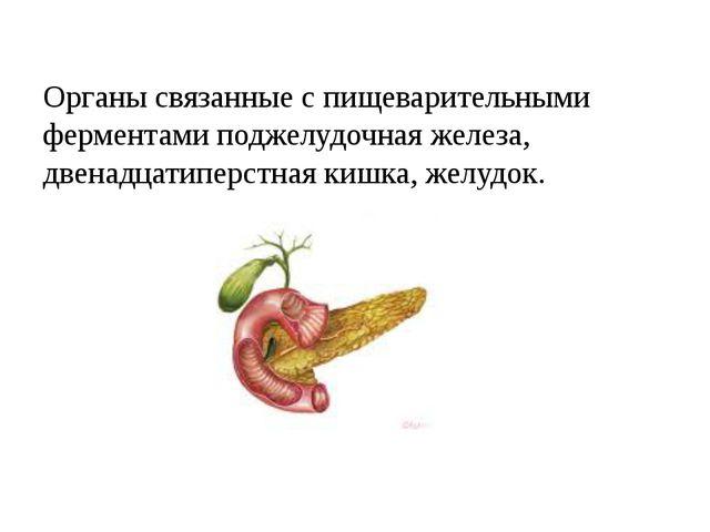 Органы связанные с пищеварительными ферментами поджелудочная железа, двенадца...