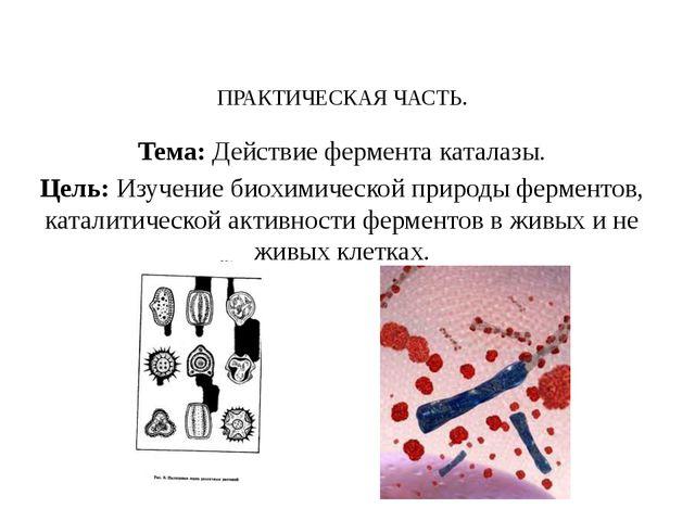 ПРАКТИЧЕСКАЯ ЧАСТЬ. Тема: Действие фермента каталазы. Цель: Изучение биохими...