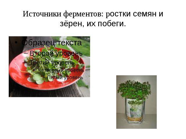 Источники ферментов: ростки семян и зёрен, их побеги.