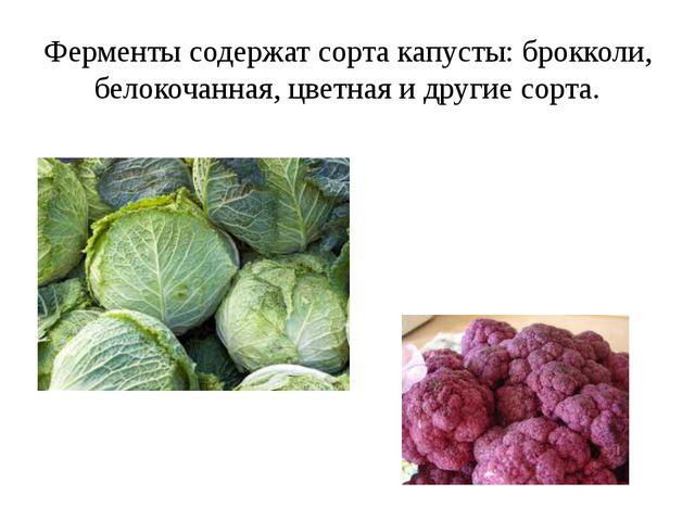Ферменты содержат сорта капусты: брокколи, белокочанная, цветная и другие сор...