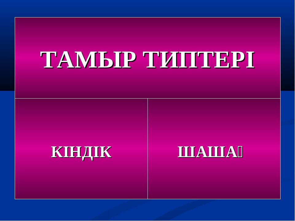 ТАМЫР ТИПТЕРІ КІНДІК ШАШАҚ