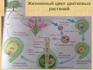Жизненный цикл цветковых растений