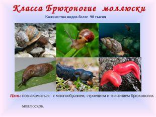 Класса Брюхоногие моллюски Количество видов более 90 тысяч Цель: познакомитьс