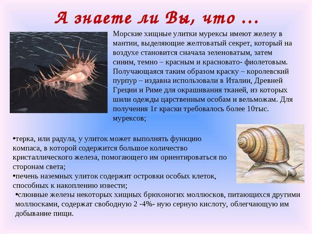 А знаете ли Вы, что … Морские хищные улитки мурексы имеют железу в мантии, вы...