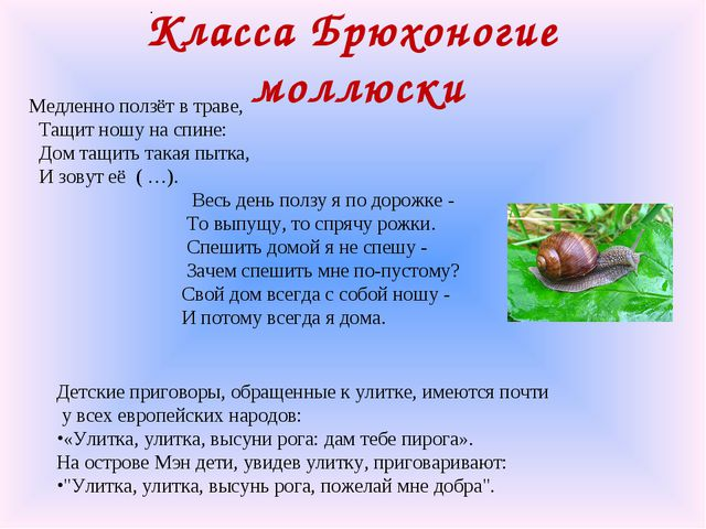 Класса Брюхоногие моллюски . Медленно ползёт в траве, Тащит ношу на спине: До...