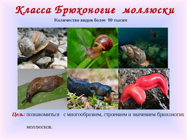 Класса Брюхоногие моллюски Количество видов более 90 тысяч Цель: познакомитьс...