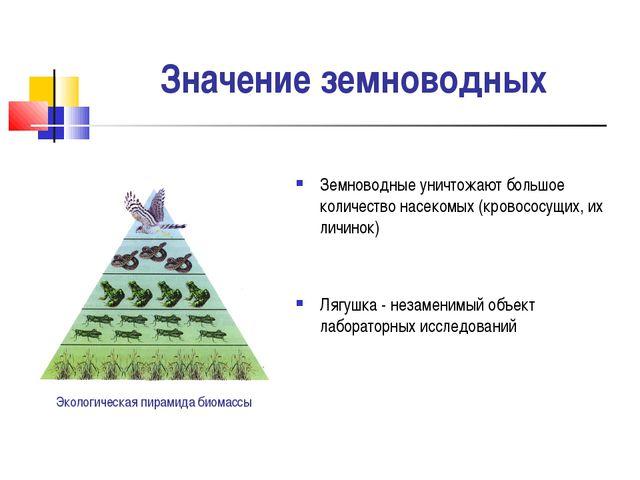 Значение земноводных Земноводные уничтожают большое количество насекомых (кро...