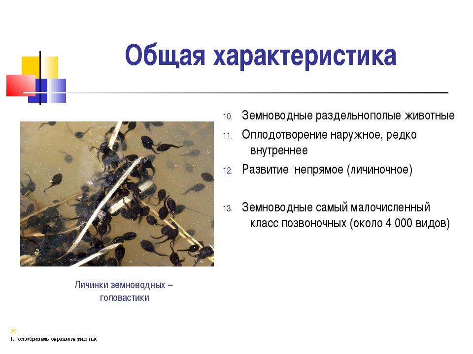 Общая характеристика 10. Земноводные раздельнополые животные 11. Оплодотворен...