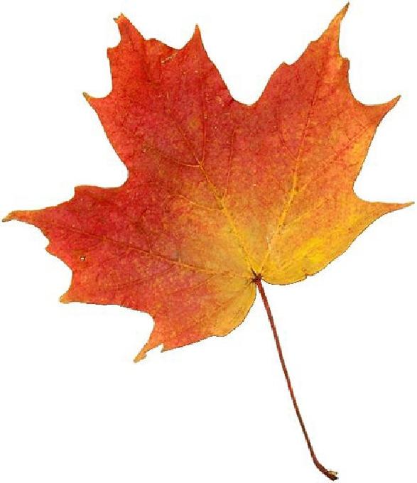 G:\Fall_Leaf.jpg