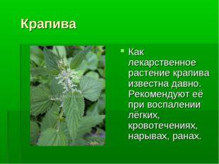 Крапива Как лекарственное растение крапива известна давно. Рекомендуют её пр