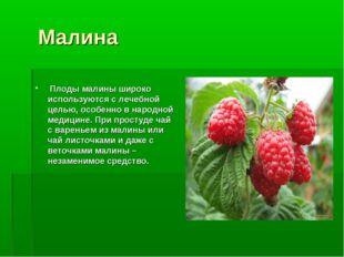 Малина Плоды малины широко используются с лечебной целью, особенно в народно