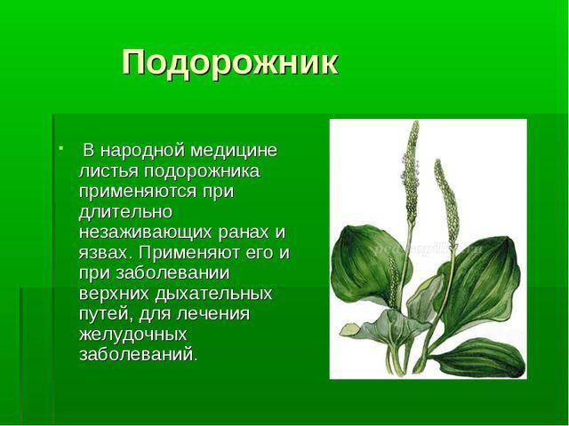 Подорожник В народной медицине листья подорожника применяются при длительно...