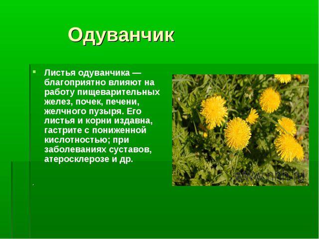 Одуванчик Листья одуванчика — благоприятно влияют на работу пищеварительных...