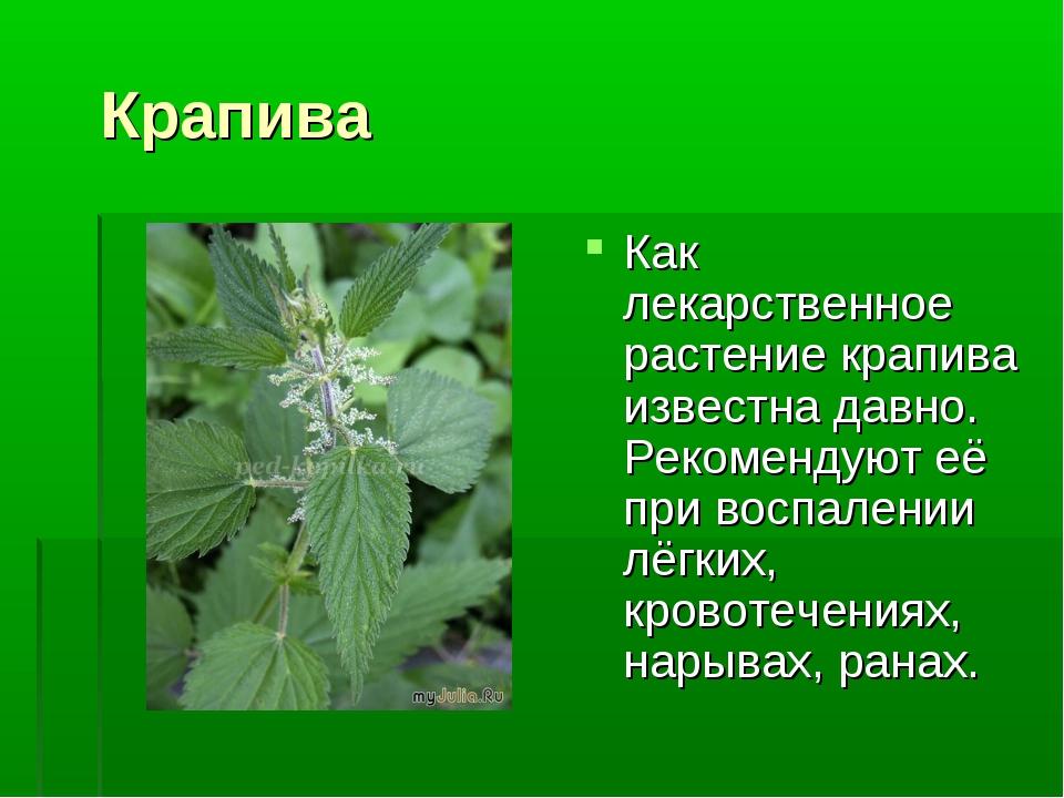 Крапива Как лекарственное растение крапива известна давно. Рекомендуют её пр...