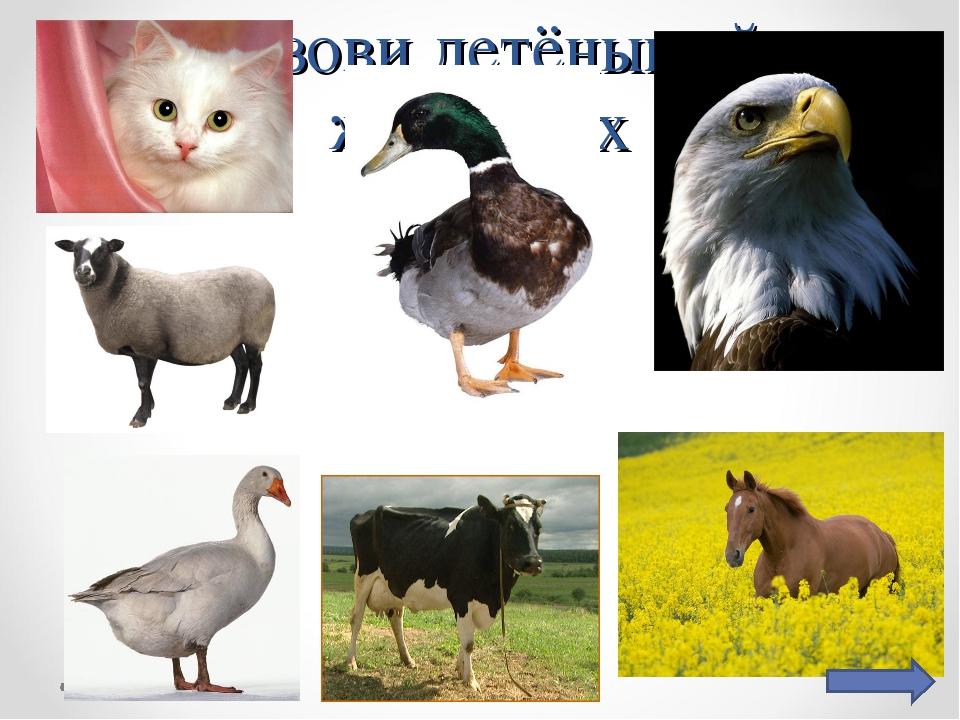 Назови детёнышей животных