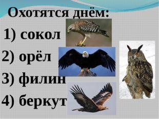 Охотятся днём: 1) сокол 2) орёл 3) филин 4) беркут